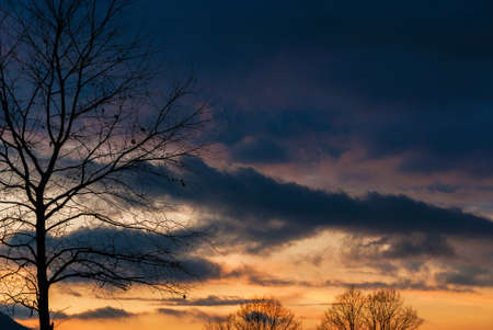 Winter sunset clouds with bare branch trees as background