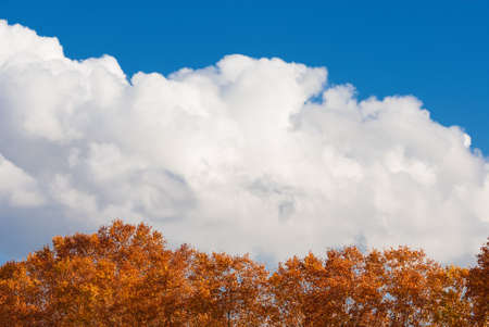 Autumn tree canopy with red leaves and clouds as background