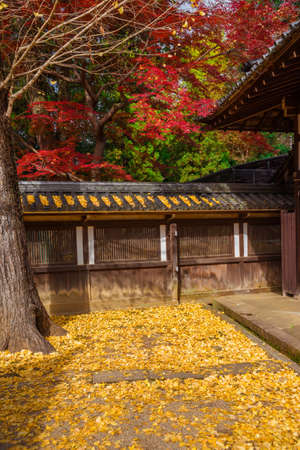 Autumn and foliage in Japan. Red maple and yellow ginkgo leaves near an ancient temple Stock Photo