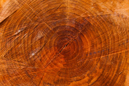 Section of a chopped trunk with aging circles as background