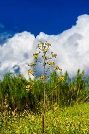Yellow spring flowers in a meadow Foto de archivo