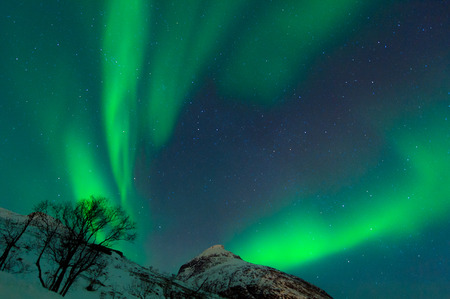 Northern Lights illuminates the sky with mountains and trees of Norway