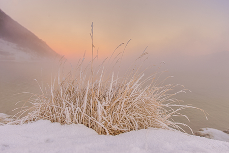 tuft of frozen grass at Norwegian sunset