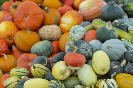 many pumpkins of different colors 版權商用圖片