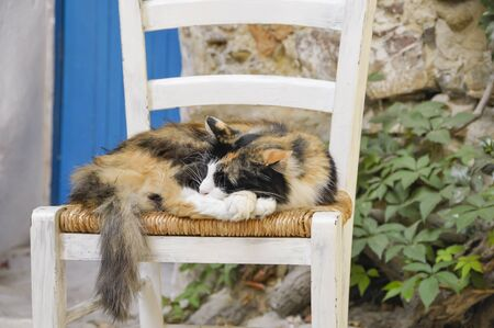 The cat in the chair that sleeps very well