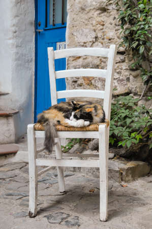 The cat sleeps on the chair in a beautiful alley with a blue door