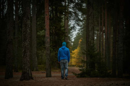 man walks in the woods with a blue sweatshirt in the middle of the pines in autumn
