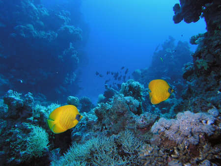 Coral scene Stock Photo - 3718771