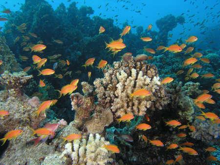 Cardumen de peces en el arrecife Foto de archivo - 3787009