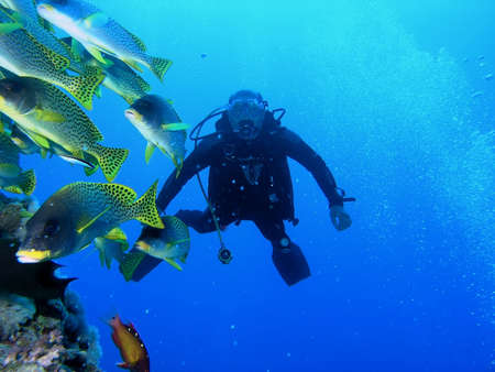 Diver on the reef with the shoal of blackspotted grunt