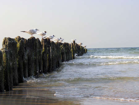 Seagulls on the Breakwater Stock Photo
