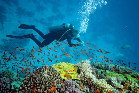 picada: Buzo en el arrecife de coral Foto de archivo