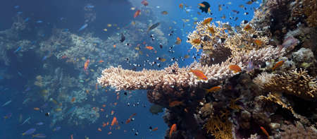 Coral scene - panorama from red sea photo