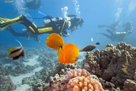 picada: Buzos en el arrecife de coral Foto de archivo