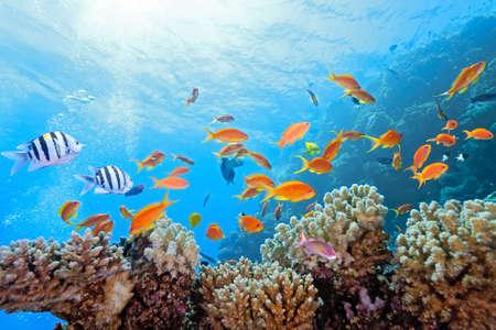 arrecife: Escena de coral en el arrecife Foto de archivo