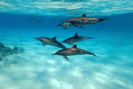 Dolphins in the sea Stock Photo - 8082057