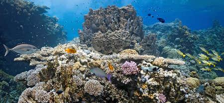Coral scene - panorama Stock Photo