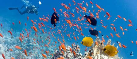 sailfin: Coral scene - illustration