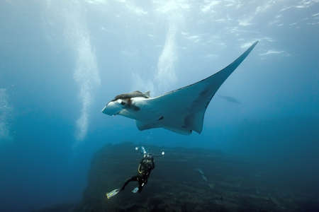 Manta and diver photographer on the reef photo