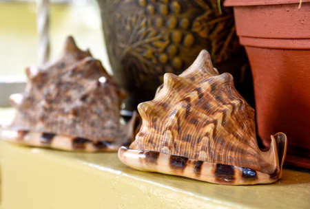 victorian house: Shells in victorian house