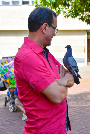 where to eat: Santo Domingo, Dominican Republic. Man looks to pigeon On His arm on Columbus Park, Colonial Zone of Santo Domingo. Editorial