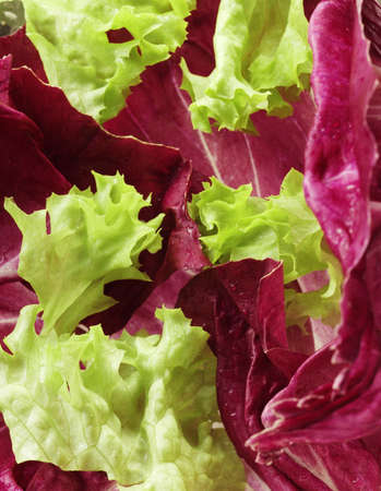 lettuce close up2
