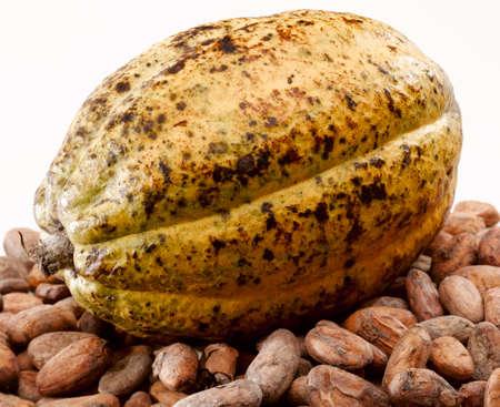 Cacao bean pod on white background
