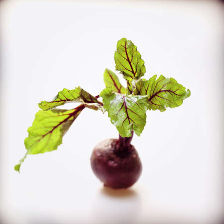 rote: beetroot with leafs Stock Photo