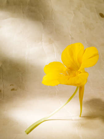 Nice yellow orchid flower for backgrounds Stock Photo