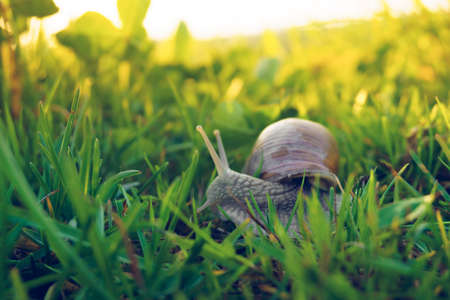 snail in the grass on a sunny day