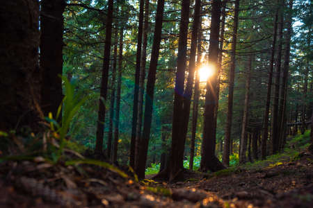 sunny bright and beautiful forest landscape at sunset