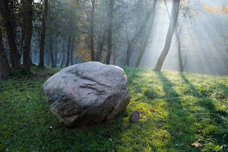 Golden sun rays penetrate through the trees on early foggy autumn morning with big rock bolder laying on the grass in the foreground
