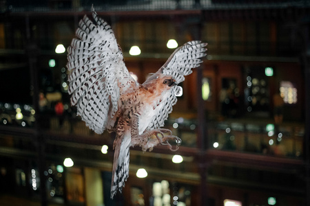 Stuffed bird of prey with widely spread wings. A museum exhibit