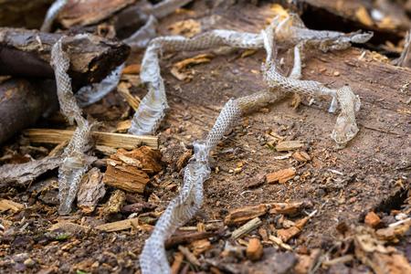 snake slough on wooden background, snake skin