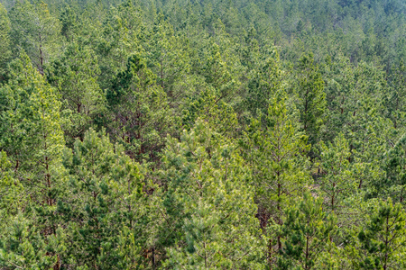 Aerial view of european pine tree forest on a sunny day. Pinetree pattern background, preserving woods Stock fotó