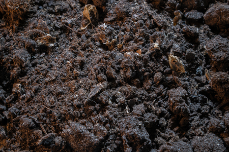 Dark texture of black dirt ground. Top view of black earth surface, agriculture background Imagens