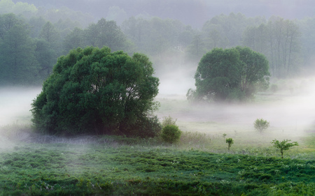Low hanging mist around trees over grass on early foggy morning in the fields. Mysterious atmosphere in nature landscape Reklamní fotografie
