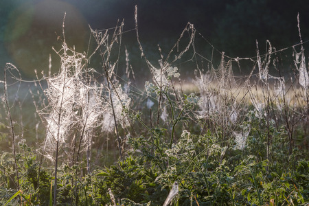 Spider web with morning dew hanging on the grass in the fields. Abstract pattern of spider web covered with rain droplets in morning sun light