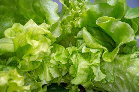 Forme astratte di foglie di lattuga verde. Vista ravvicinata della foglia di insalata. Agricoltura urbana, stile di vita sano Archivio Fotografico