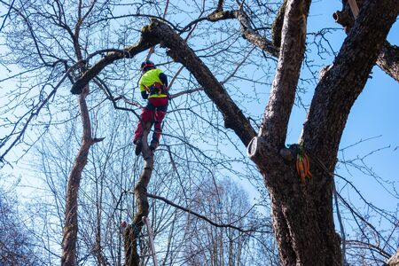 Man pruning tree tops using a saw. Lumberjack wearing protection gear and sawing branches after storm in the city. High risk job