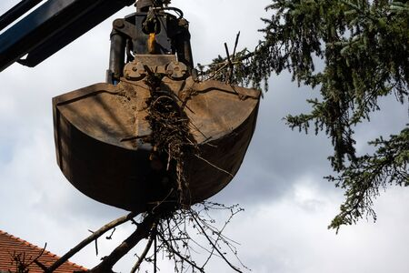 Heavy industrial machine scoop wooden branches and dirt of the ground. Hydraulic shovel lifting wood and waste from the garden Banco de Imagens