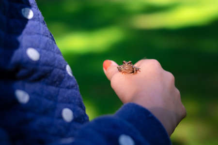 Green frog sitting on little girl hand. Child holding frog in the harden outside.Kid learning about nature. 스톡 콘텐츠