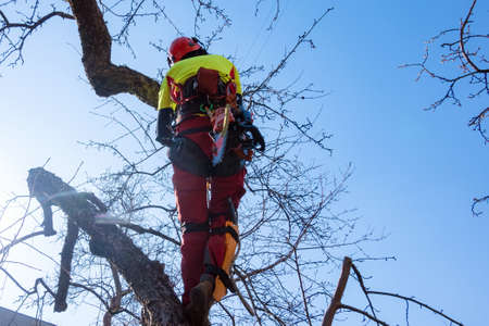 Man pruning tree tops using a saw. Lumberjack wearing protection gear and sawing branches after storm in the city. High risk job Archivio Fotografico