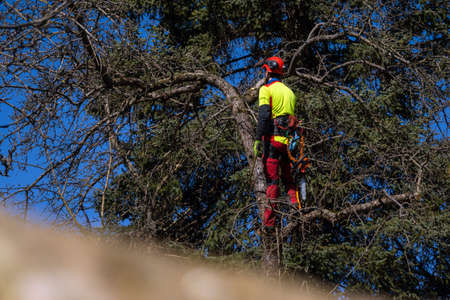 Man pruning tree tops using a saw. Lumberjack wearing protection gear and sawing branches after storm in the city. High risk job 에디토리얼