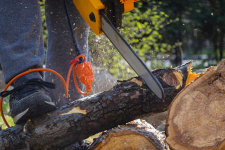 Men sawing apple tree with a chainsaw in his backyard. Worker pruning tree trunk in the garden Banco de Imagens