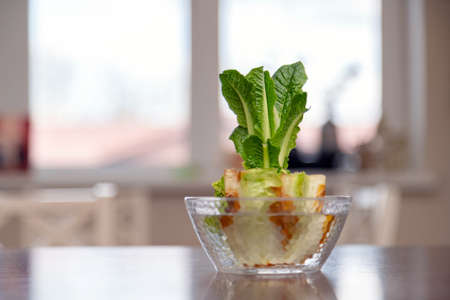 Regrowing chinese cabbage in a glass bowl. Using vegetable scraps to grow organic vegetables at home. Stock fotó