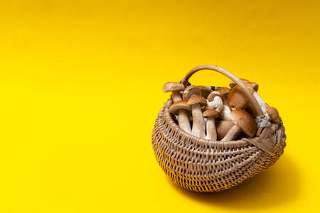 Full wicker basket of Boletus Edulis isolated on yellow background. Edible mushroom basket with space for text. Nobody
