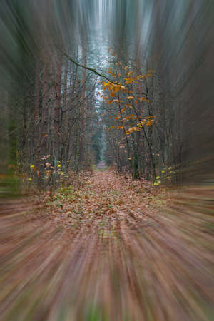 Perspective of wet footpath in the forest. Woodland trail on a cloudy day. Nobody Banque d'images