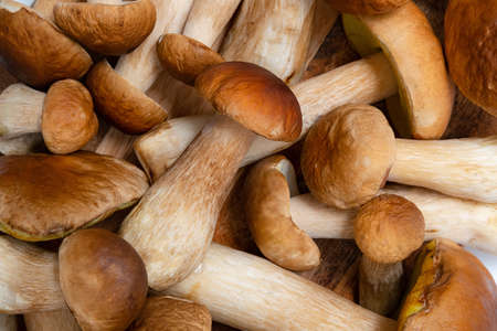 Brown cap Boletus Edulis background. A lot of edible mushrooms on a kitchen table. Nobody