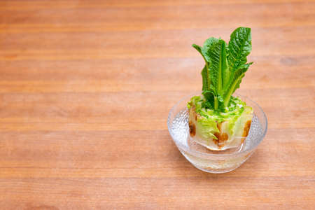 Regrowing chinese cabbage in a glass bowl. Using vegetable scraps to grow organic vegetables at home. Banque d'images